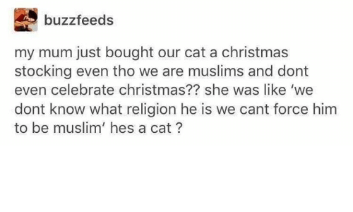 Christmas, Muslim, and Religion: buzzfeeds  my mum just bought our cat a christmas  stocking even tho we are muslims and dont  even celebrate christmas?? she was like 'we  dont know what religion he is we cant force hinm  to be muslim' hes a cat?