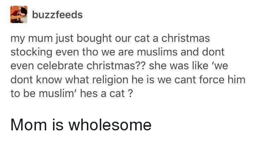Christmas, Muslim, and Wholesome: buzzfeeds  my mum just bought our cat a christmas  stocking even tho we are muslims and dont  even celebrate christmas?? she was like 'we  dont know what religion he is we cant force him  to be muslim' hes a cat? <p>Mom is wholesome</p>