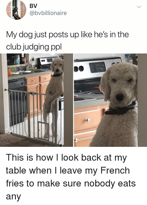 Club, Memes, and French: @bvbillionaire  My dog just posts up like he's in the  club judging ppl This is how I look back at my table when I leave my French fries to make sure nobody eats any