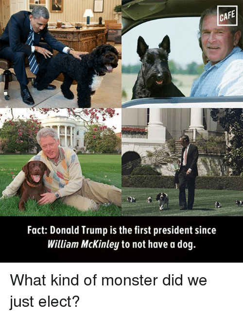 mckinley: CAFE  Fact: Donald Trump is the first president since  William McKinley to not have a dog. What kind of monster did we just elect?