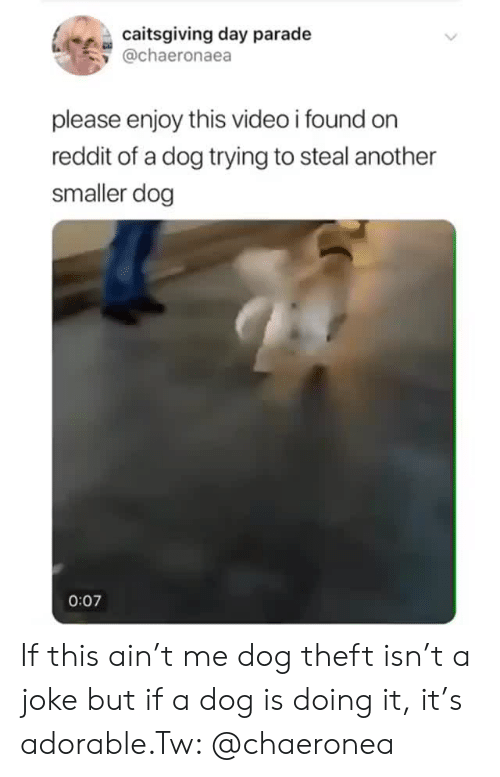 Reddit, Video, and Adorable: caitsgiving day parade  y @chaeronaea  please enjoy this video i found orn  reddit of a dog trying to steal another  smaller dog  0:07 If this ain't me dog theft isn't a joke but if a dog is doing it, it's adorable.Tw: @chaeronea