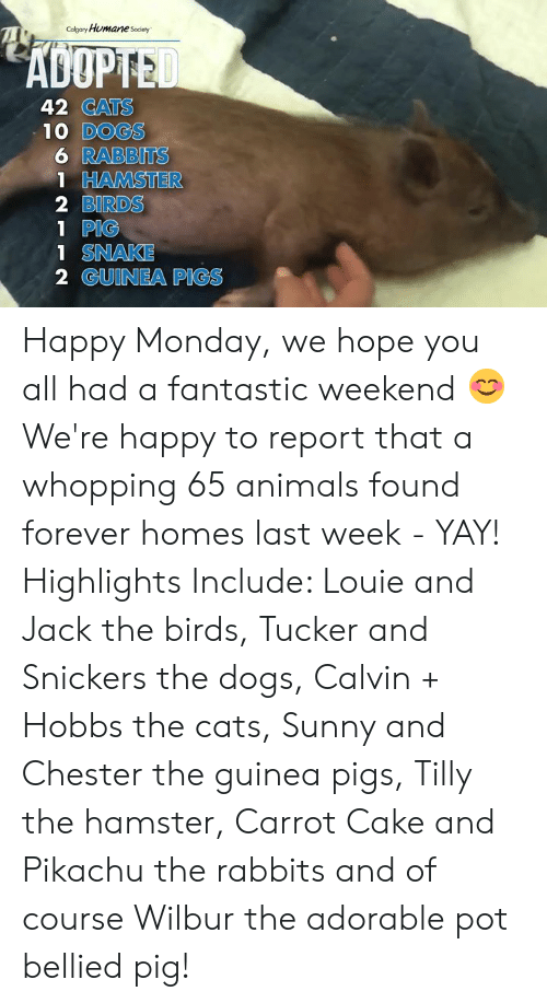 Animals, Cats, and Dogs: Calgary HumaneSociety  ADOPTED  42 CATS  10 DOGS  6 RABBITS  1 HAMSTER  2 BIRDS  1 PIG  1 SNAKE  2 GUINEA PIGS Happy Monday, we hope you all had a fantastic weekend 😊  We're happy to report that a whopping 65 animals found forever homes last week - YAY!   Highlights Include: Louie and Jack the birds, Tucker and Snickers the dogs, Calvin + Hobbs the cats, Sunny and Chester the guinea pigs, Tilly the hamster, Carrot Cake and Pikachu the rabbits and of course Wilbur the adorable pot bellied pig!