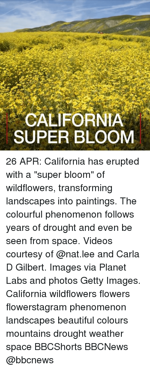 "Beautiful, Memes, and Paintings: CALIFORNIA  SUPER BLOOM 26 APR: California has erupted with a ""super bloom"" of wildflowers, transforming landscapes into paintings. The colourful phenomenon follows years of drought and even be seen from space. Videos courtesy of @nat.lee and Carla D Gilbert. Images via Planet Labs and photos Getty Images. California wildflowers flowers flowerstagram phenomenon landscapes beautiful colours mountains drought weather space BBCShorts BBCNews @bbcnews"