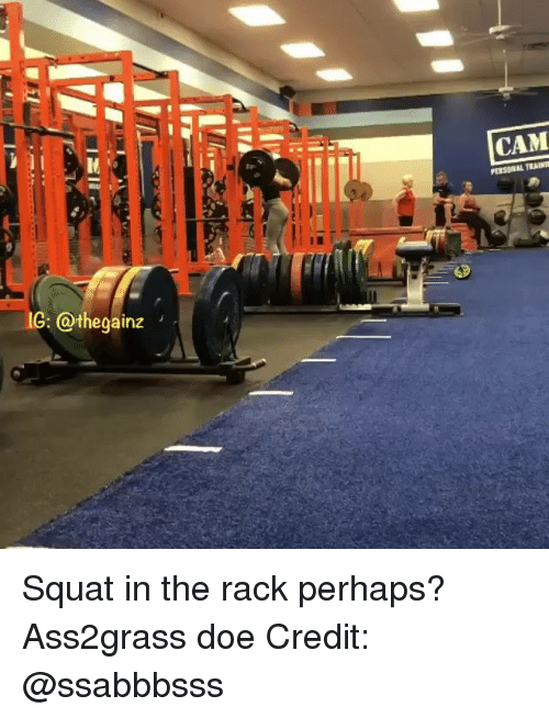 Doe, Memes, and Squat: CAM  G: @thegainz Squat in the rack perhaps? Ass2grass doe Credit: @ssabbbsss