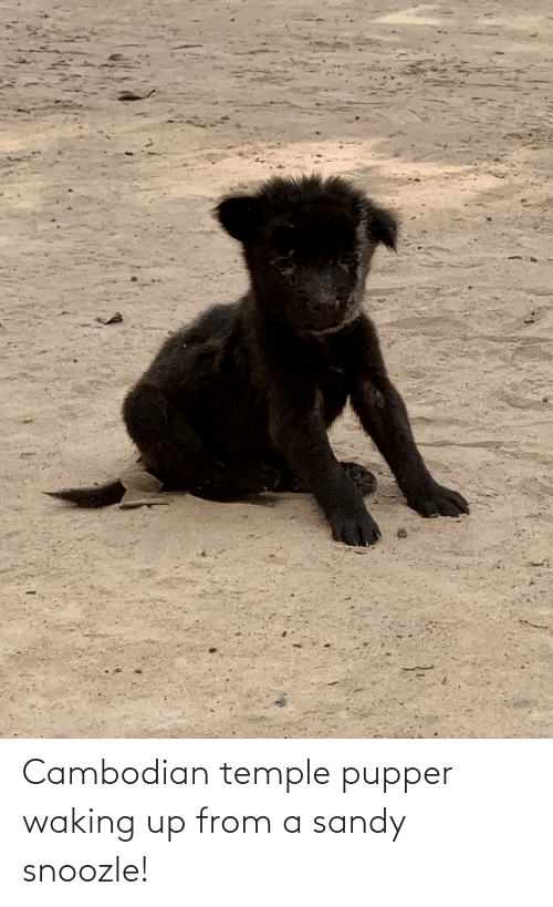waking up: Cambodian temple pupper waking up from a sandy snoozle!
