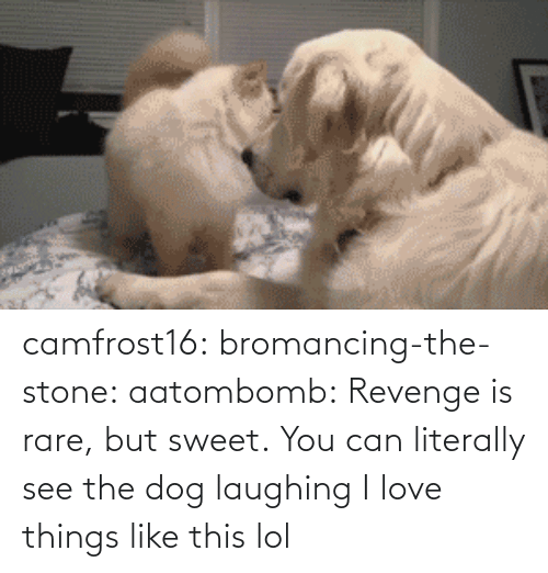 Dog Laughing: camfrost16:  bromancing-the-stone:  aatombomb:  Revenge is rare, but sweet.  You can literally see the dog laughing  I love things like this lol