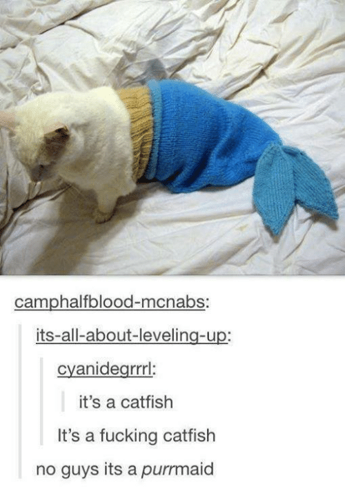 A Catfish: camphalfblood-macnabs:  its-all-about-levelin  cyanidegrrrl:  it's a catfish  It's a fucking catfish  no guys its a purrmaid