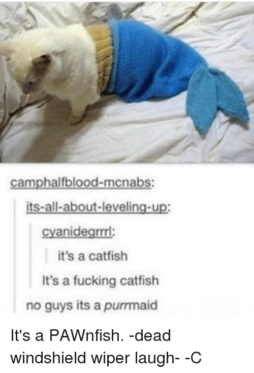 A Catfish: camphalfblood-mocnabs:  its-all-about-leveling-up:  cyanidegrml:  it's a catfish  It's a fucking catfish  no guys its a purrmaid It's a PAWnfish. -dead windshield wiper laugh- -C