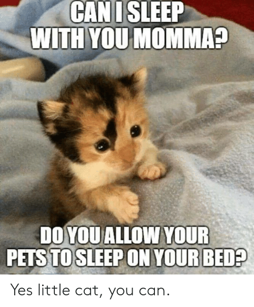 Sleep With: CAN I SLEEP  WITH YOU MOMMA?  DO YOU ALLOW YOUR  PETS TO SLEEP ON YOUR BED? Yes little cat, you can.