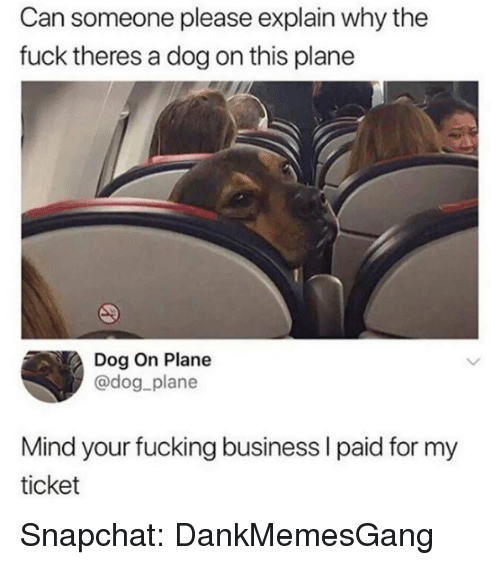 Fucking, Memes, and Snapchat: Can someone please explain why the  fuck theres a dog on this plane  Dog On Plane  @dog_plane  Mind your fucking business I paid for my  ticket Snapchat: DankMemesGang