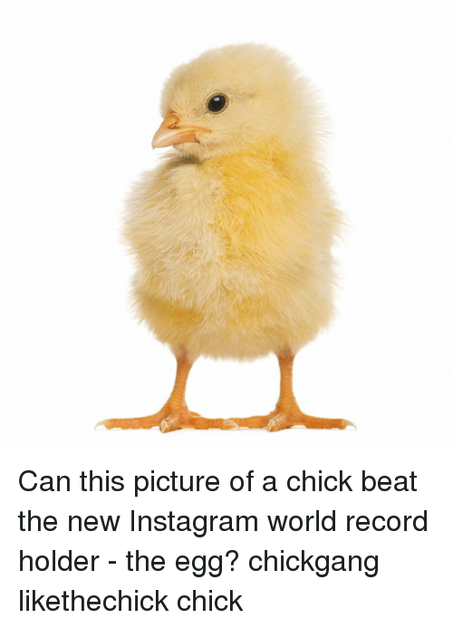 Instagram, Memes, and Record: Can this picture of a chick beat the new Instagram world record holder - the egg? chickgang likethechick chick