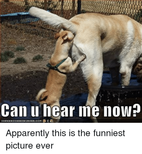 Image of: Pics Funniest Picture Ever Apparently Dank Memes And Can Can Hear Me Now Canhascheezeurger Ballmemescom 25 Best Memes About Funniest Picture Ever Funniest Picture
