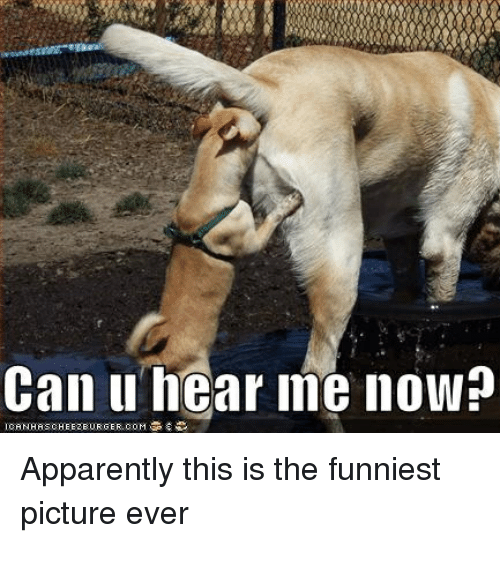 Image of: Wildlife Apparently Can And Picture Can Hear Me Now Icanhascheezeurger Coms Apparently This Is The Funniest Picture Ever Ballmemescom 25 Best Memes About Funniest Picture Ever Funniest Picture