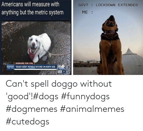 Dogs: Can't spell doggo without 'good'!#dogs #funnydogs #dogmemes #animalmemes #cutedogs