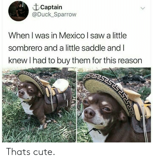 Cute, Saw, and Duck: Captain  @Duck_Sparrow  When I was in Mexico I saw a little  sombrero and a little saddle and I  knew I had to buy them for this reason Thats cute.
