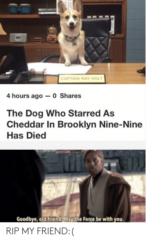 Brooklyn, Old, and Brooklyn Nine Nine: CAPTAIN RAY HOLT  4 hours ago 0 Shares  The Dog Who Starred As  Cheddar In Brooklyn Nine-Nine  Has Died  Goodbye, old friend, May the Force be with you. RIP MY FRIEND:(