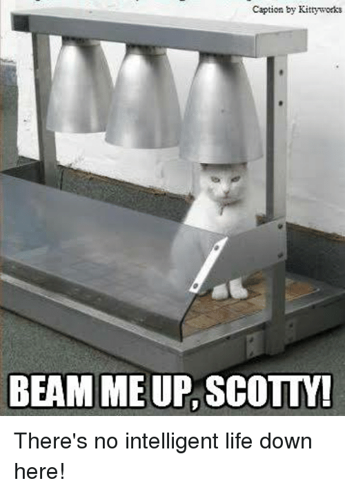 Beamly: Caption by Kittyworks  BEAM ME UP SCOLLM There's no intelligent life down here!