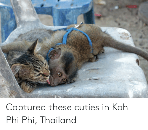 phi: Captured these cuties in Koh Phi Phi, Thailand