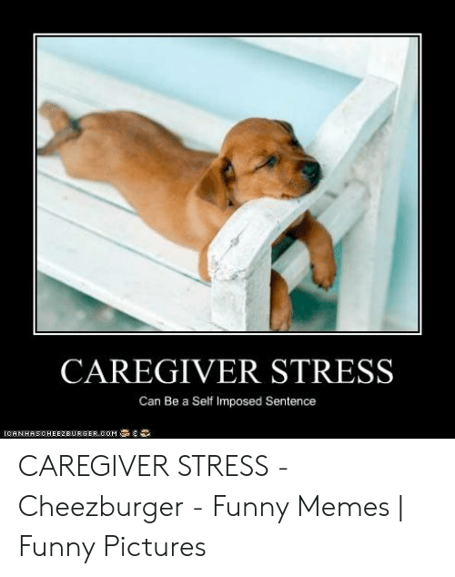 Funny Stress Memes: CAREGIVER STRESS  Can Be a Self Imposed Sentence  CANHASCHEEZEURGEROOM CAREGIVER STRESS - Cheezburger - Funny Memes | Funny Pictures