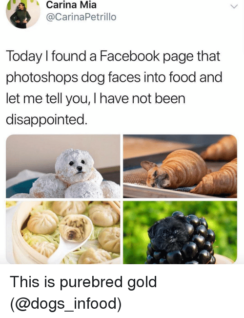 Dog Faces: Carina Mia  @CarinaPetrillo  Today I found a Facebook page that  photoshops dog faces into food and  let me tell you, I have not been  disappointed This is purebred gold (@dogs_infood)