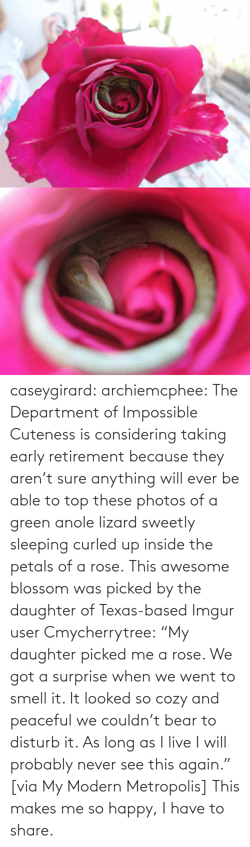"user: caseygirard:  archiemcphee:   The Department of Impossible Cuteness is considering taking early retirement because they aren't sure anything will ever be able to top these photos of a green anole lizard sweetly sleeping curled up inside the petals of a rose. This awesome blossom was picked by the daughter of Texas-based Imgur user Cmycherrytree: ""My daughter picked me a rose. We got a surprise when we went to smell it. It looked so cozy and peaceful we couldn't bear to disturb it. As long as I live I will probably never see this again."" [via My Modern Metropolis]   This makes me so happy, I have to share."