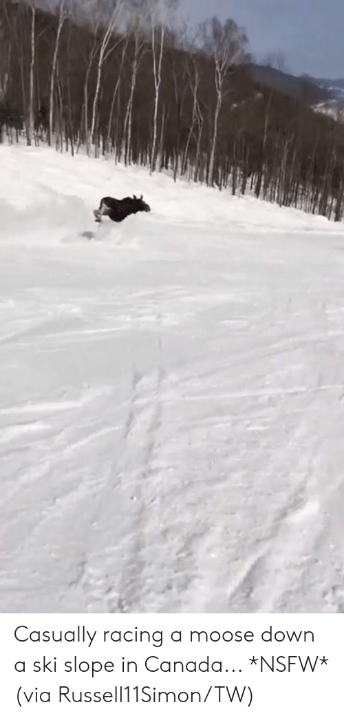Nsfw, Canada, and Moose: Casually racing a moose down a ski slope in Canada... *NSFW*  (via Russell11Simon/TW)