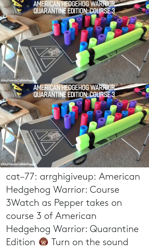 Takes: cat–77:  arrghigiveup:   American Hedgehog Warrior: Course 3Watch as Pepper takes on course 3 of American Hedgehog Warrior: Quarantine Edition 🦔     Turn on the sound