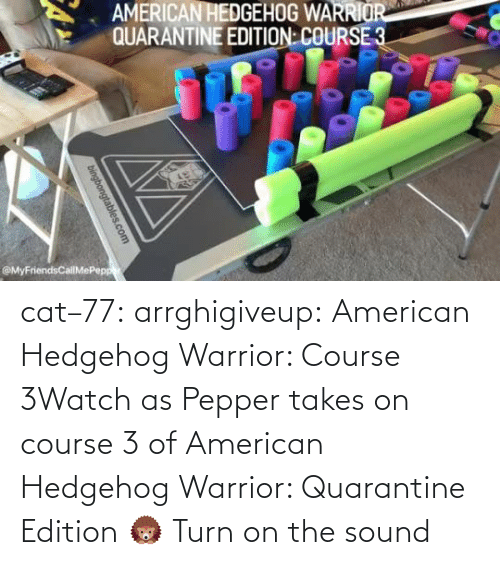 edition: cat–77: arrghigiveup:   American Hedgehog Warrior: Course 3Watch as Pepper takes on course 3 of American Hedgehog Warrior: Quarantine Edition 🦔     Turn on the sound