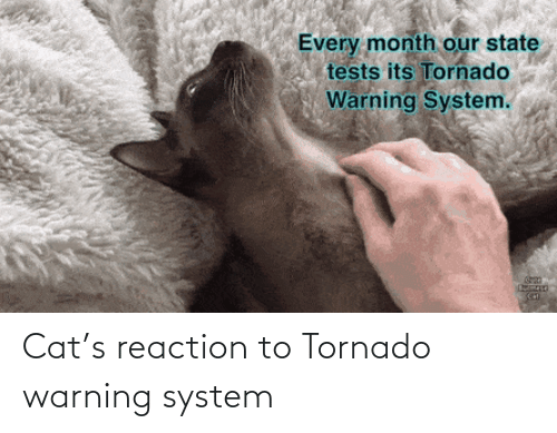 reaction: Cat's reaction to Tornado warning system