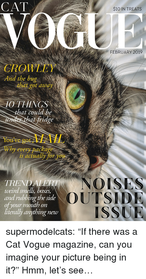 "Smell, Tumblr, and Weird: CAT  $10 IN TREATS  FEBRUARY 2019  QIL  And the bug  CROWLEY  that got audy  10 THINGS  at couldbe  fridge  You've  gotMAIL  Why every package  is actually for you  NOISES  TREND  weird smell, boxes  and rubbing the side  oT your mouth on  literally anything new  OUTSID  ISSUR supermodelcats:  ""If there was a Cat Vogue magazine, can you imagine your picture being in it?"" Hmm, let's see…"