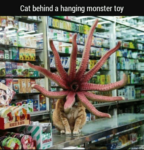 Memes, Monster, and 🤖: Cat behind a hanging monster toy