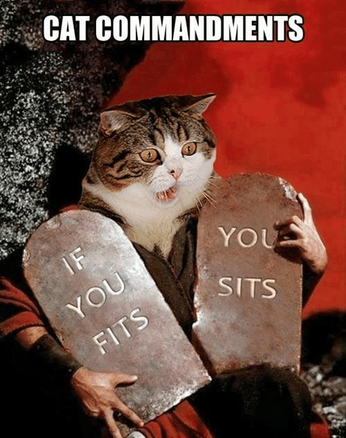 Sits: CAT COMMANDMENTS  IF  YOU  YOU  SITS  FITS