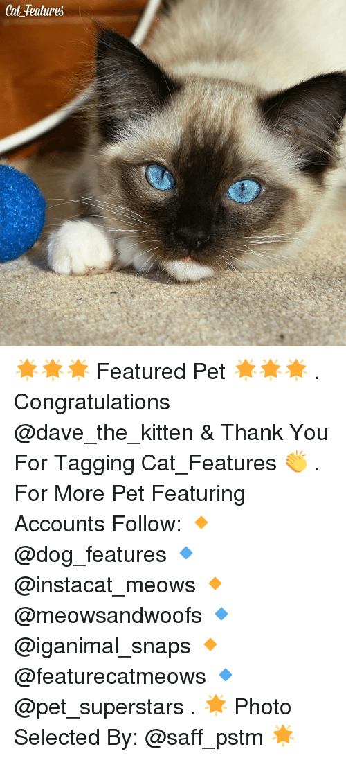 congratulation: Cat features 🌟🌟🌟 Featured Pet 🌟🌟🌟 . Congratulations @dave_the_kitten & Thank You For Tagging Cat_Features 👏 . For More Pet Featuring Accounts Follow: 🔸 @dog_features 🔹 @instacat_meows 🔸 @meowsandwoofs 🔹 @iganimal_snaps 🔸 @featurecatmeows 🔹 @pet_superstars . 🌟 Photo Selected By: @saff_pstm 🌟