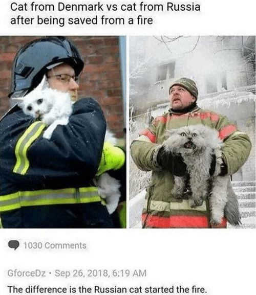 Fire, Denmark, and Russia: Cat from Denmark vs cat from Russia  after being saved from a fire  1030 Comments  GforceDz Sep 26, 2018, 6:19 AM  The difference is the Russian cat started the fire.