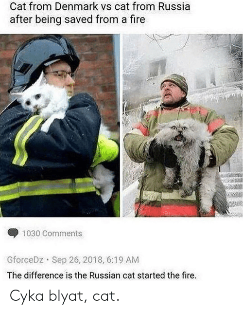 Denmark: Cat from Denmark vs cat from Russia  after being saved from a fire  1030 Comments  Sep 26, 2018, 6:19 AM  GforceDz  The difference is the Russian cat started the fire. Cyka blyat, cat.
