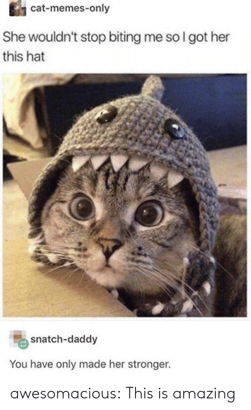 Memes, Tumblr, and Blog: cat-memes-only  She wouldn't stop biting me so I got her  this hat  snatch-daddy  You have only made her stronger. awesomacious:  This is amazing