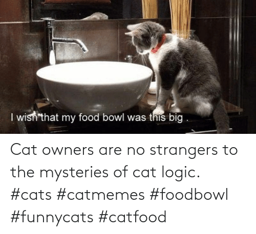 strangers: Cat owners are no strangers to the mysteries of cat logic. #cats #catmemes #foodbowl #funnycats #catfood