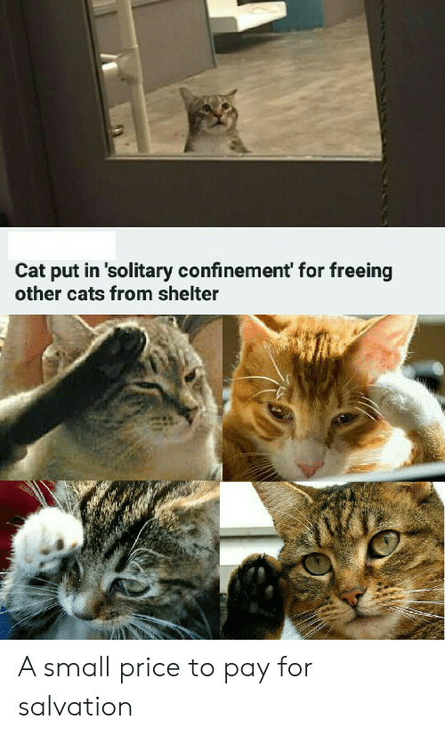 Cats, Cat, and Shelter: Cat put in 'solitary confinement' for freeing  other cats from shelter A small price to pay for salvation