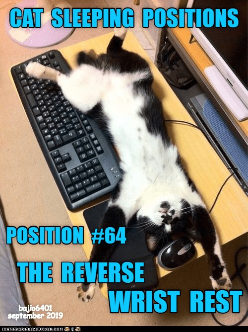 Sleeping, Cat, and Rest: CAT SLEEPING POSITIONS  POSITION #64  THE REVERSE  WRIST REST  bajio6401  september 2019  ICANHASCHEE2EBURGER oOM  ২২।