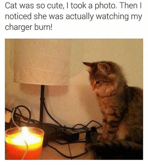 Cute, Cat, and Charger: Cat was so cute, I took a photo. Then l  noticed she was actually watching my  charger burn!