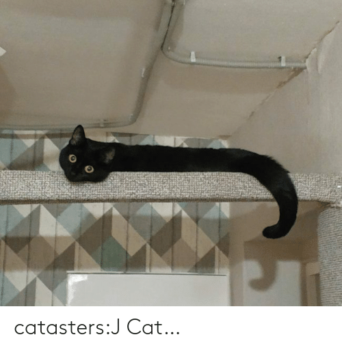 user: catasters:J Cat…
