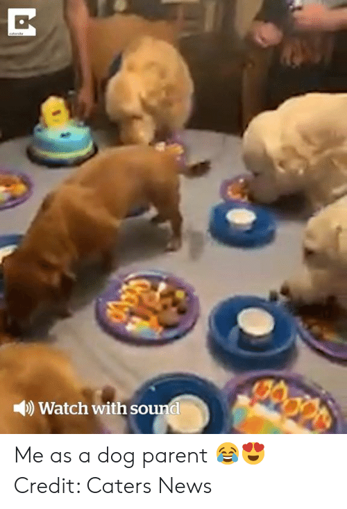 News, Watch, and Dog: catenty  M  Watch with sound Me as a dog parent 😂😍  Credit: Caters News