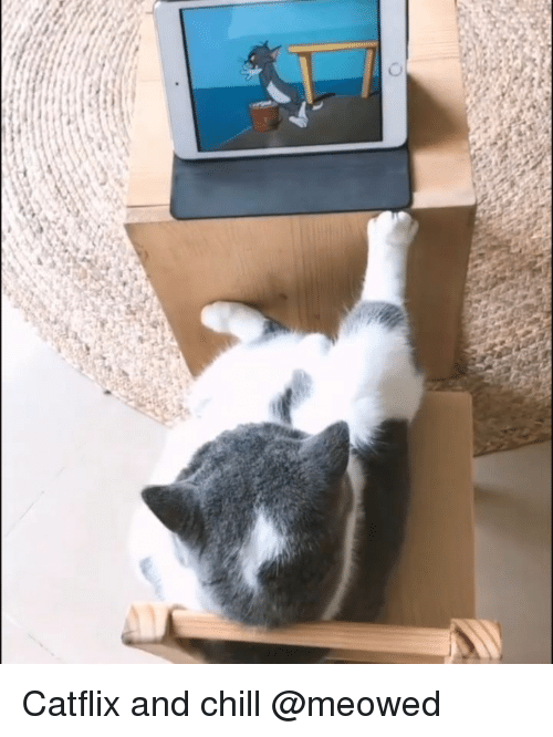 Chill, Memes, and _______ and Chill: Catflix and chill @meowed