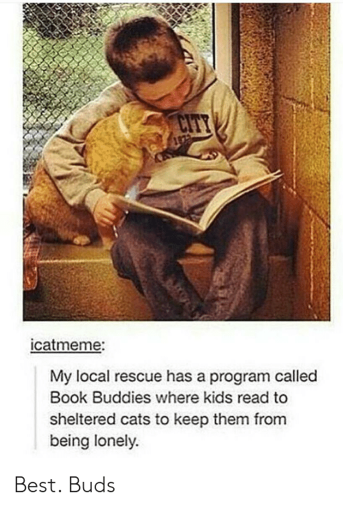 Cats, Best, and Book: catmeme:  My local rescue has a program called  Book Buddies where kids read to  sheltered cats to keep them from  being lonely Best. Buds