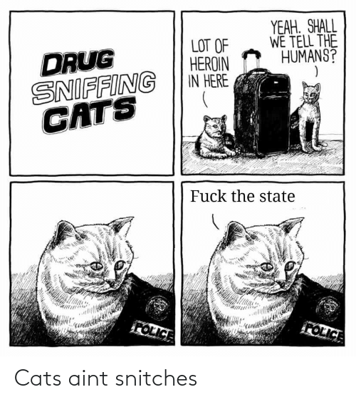 aint: Cats aint snitches