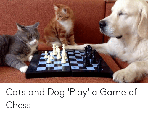 Play A Game: Cats and Dog 'Play' a Game of Chess