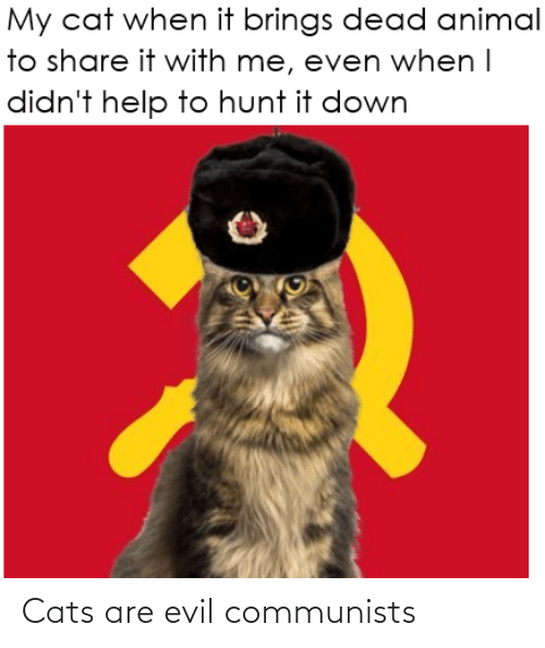 Are: Cats are evil communists