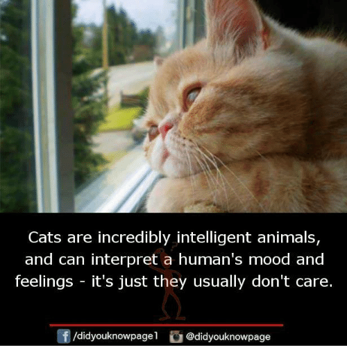 Intelligente: Cats are incredibly intelligent animals,  and can interpret a human's mood and  feelings -it's just they usually don't care.  /didyouknowpagel @didyouknowpage