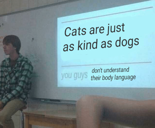 Cats, Dogs, and Language: Cats are just  as kind as dogs  don't understand  you guys their body language
