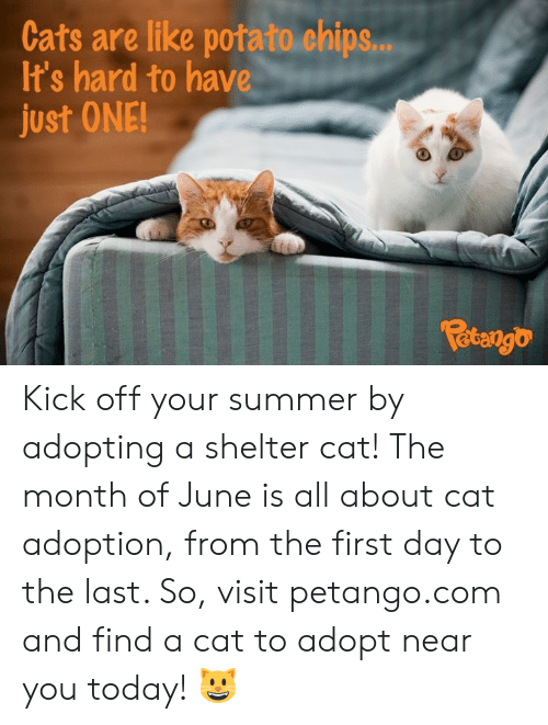 Cats, Memes, and Summer: Cats are like potato chips...  It's hard to have  just ONE!  Fetango Kick off your summer by adopting a shelter cat! The month of June is all about cat adoption, from the first day to the last. So, visit petango.com and find a cat to adopt near you today! 😺
